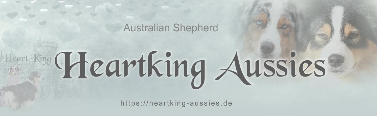 Heartking Aussies Australian Shepherds